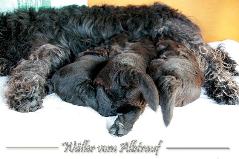 D-Wurf-woche-5-Bild-1