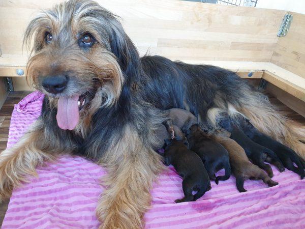 Die Welpen sind geboren :-)